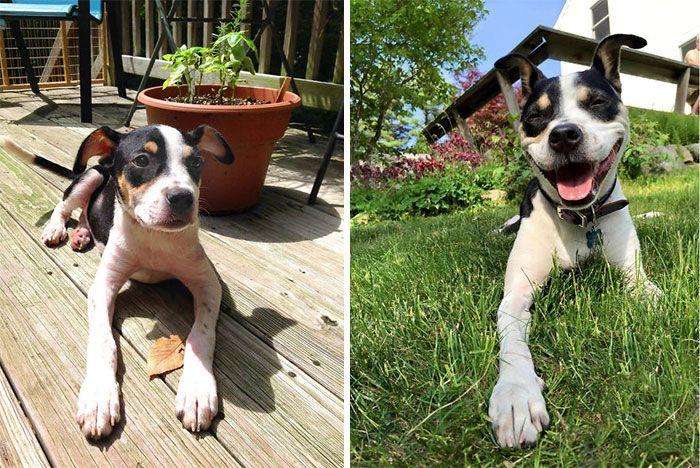 Очаровательные собаки: в детстве и сейчас