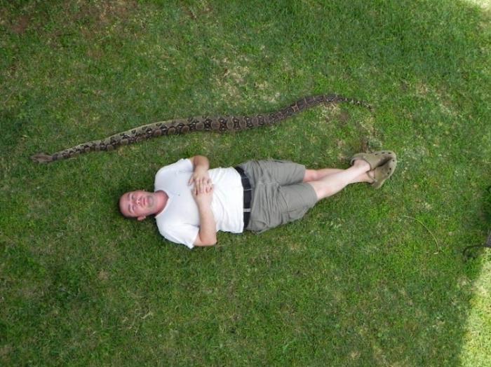 Золотой ретривер спас хозяев от змеи