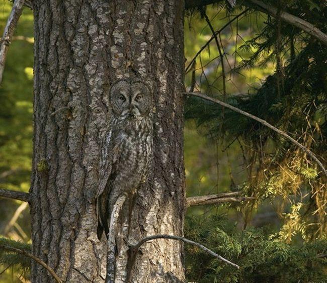 Мастера маскировки в дикой природе