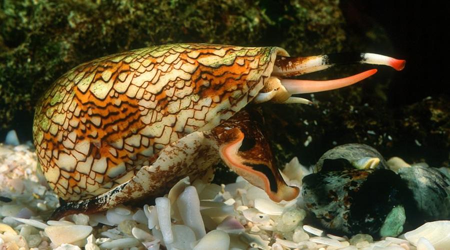 Смертельно опасные создания, которых считают безобидными