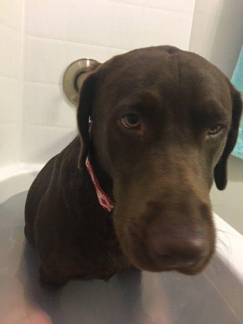 Собаке тоже захотелось принять ванну