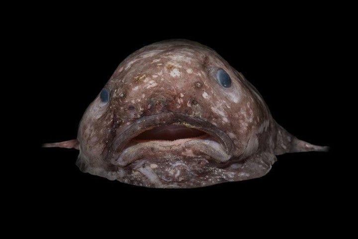 Новые виды глубинных монстров у берегов Австралии
