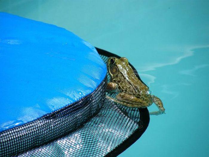 Изобретение для животных, застрявших в водоемах