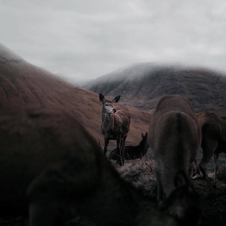 Природа и дикие животные Шотландии от Франа Марта