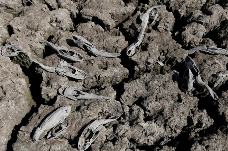 Смертельная засуха превратила водоем в кладбище