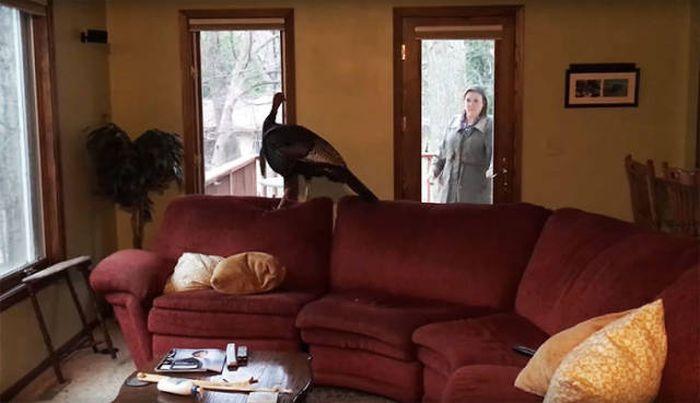 Незваный гость вошел через окно