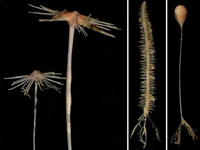 Жуткие существа, выловленные в водах Австралии