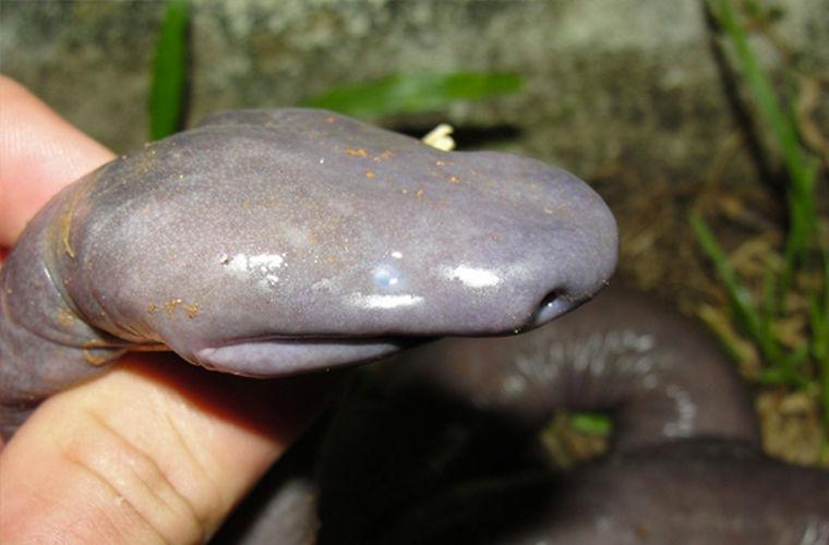Это удивительное животное выглядит не совсем прилично