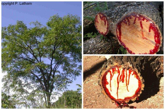 Невероятные деревья нашей планеты