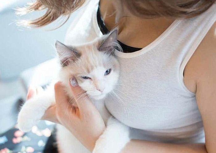 Коты без ума от женской груди
