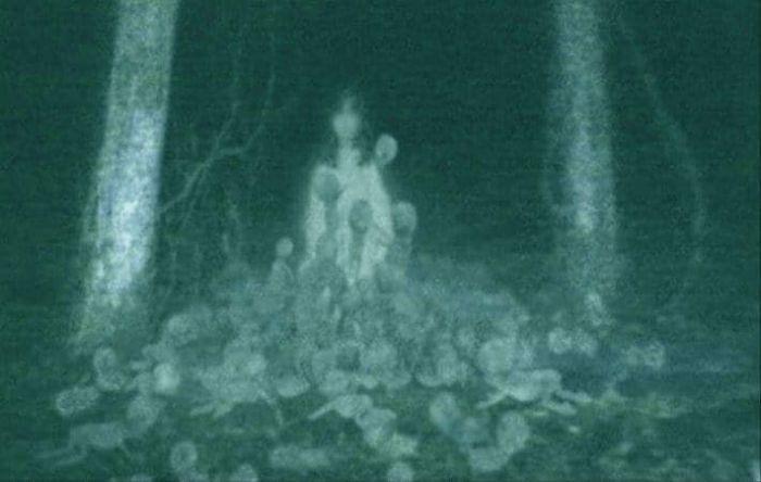 Жуткие фото, сделанные посреди леса