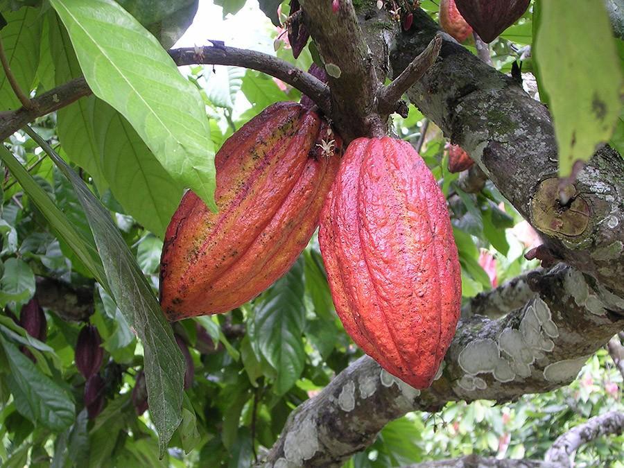 25 любопытных фактов о шоколаде