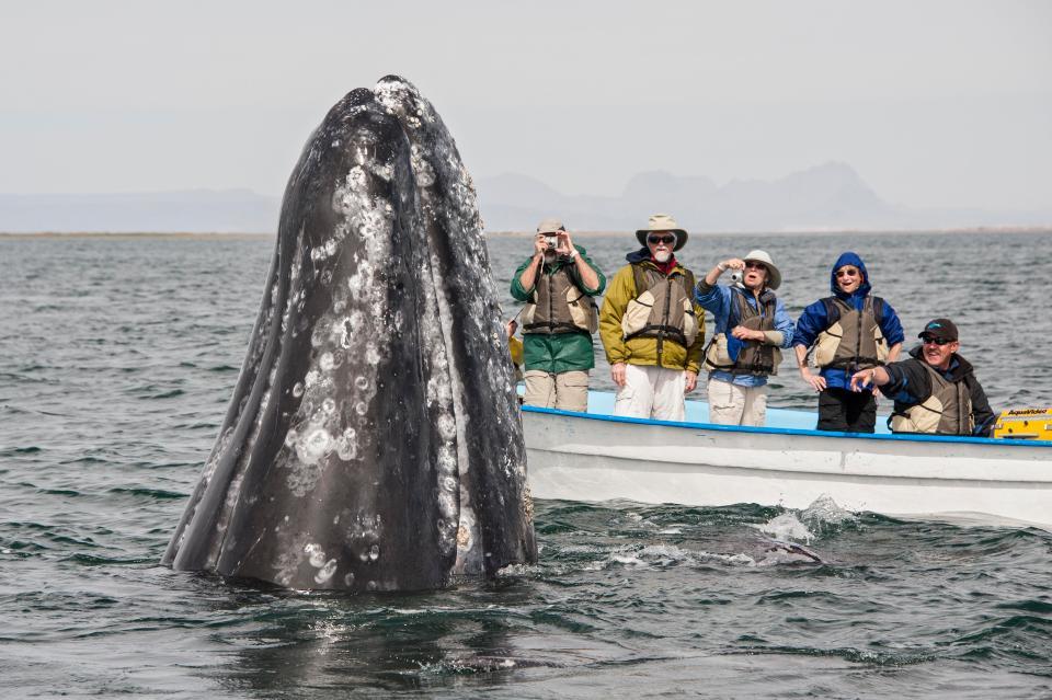 Потрясающее зрелище: туристы гладят китов