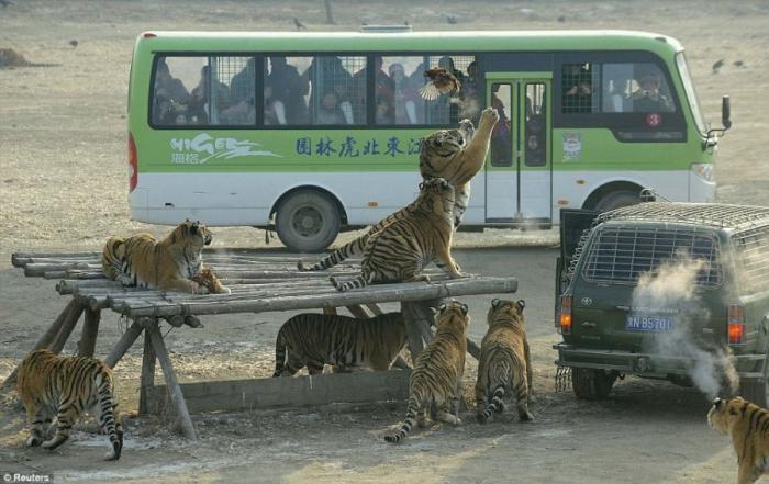 Кровавый аттракцион в Китае