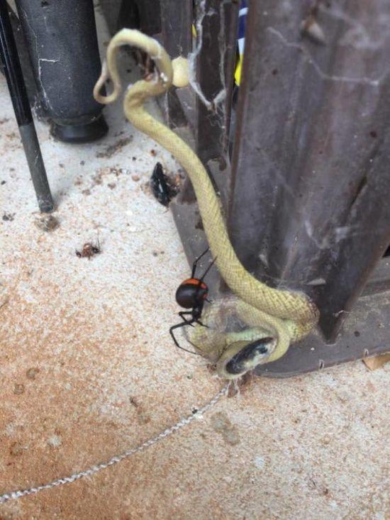 Австралийская жуть: опасные животные