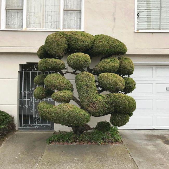 Необычные деревья в Сан-Франциско
