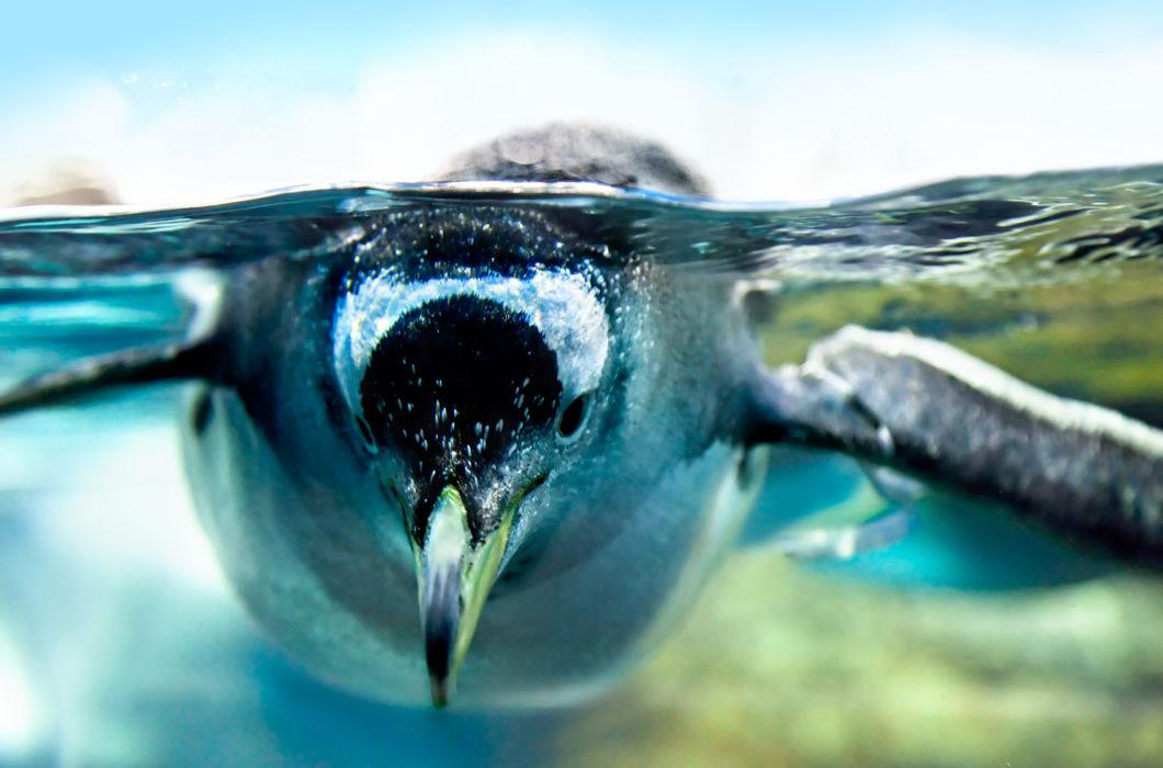 Сухопутные животные, застигнутые за плаванием