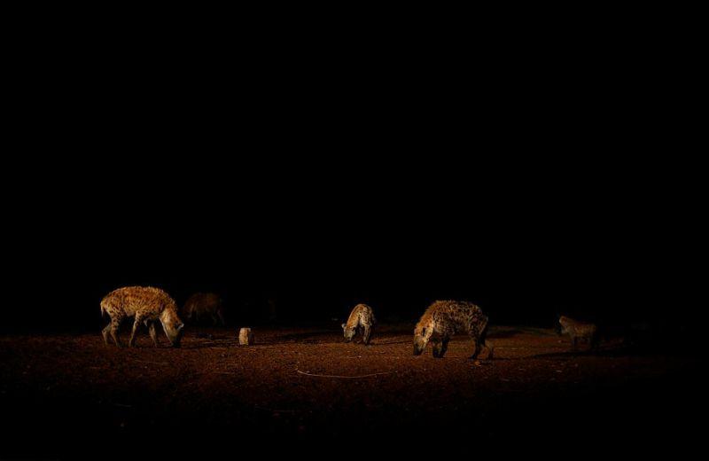 Заклинатель гиен из Эфиопии