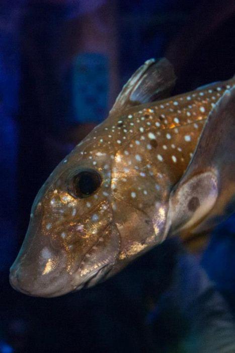 Жутковатые обитатели океанических глубин