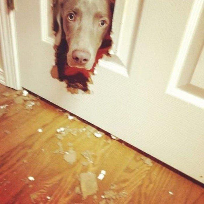 Снимки собак, пойманных с поличным