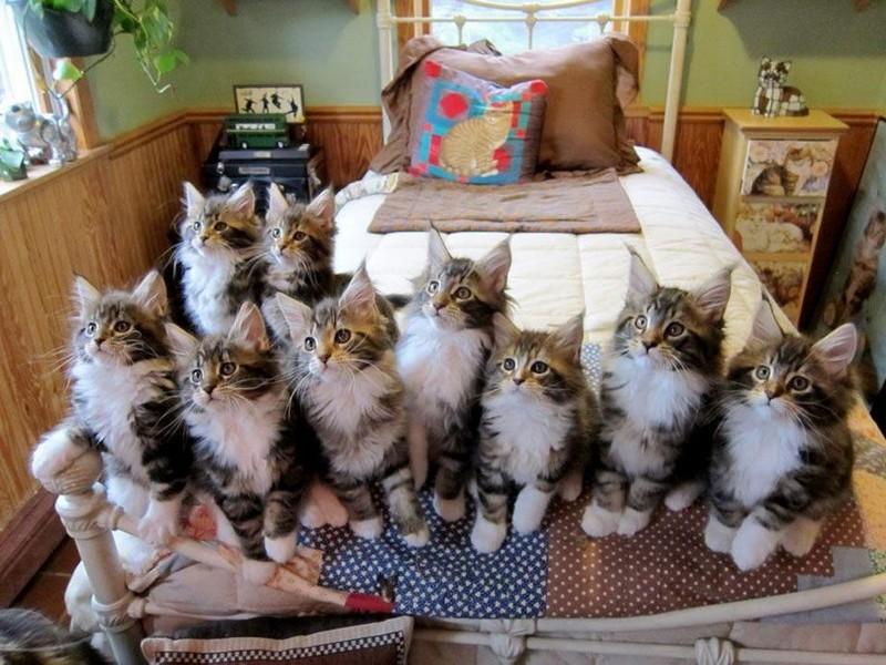 Забавные и симпатичные котики поднимают настроение