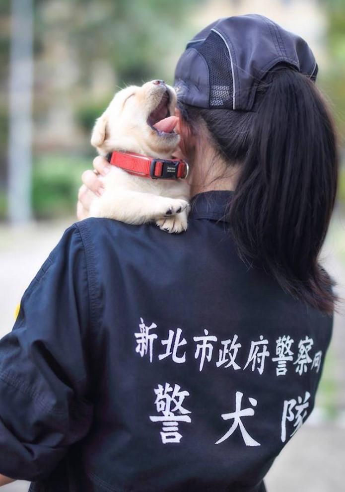 Полиция Тайваня пополнилась мимишными служащими