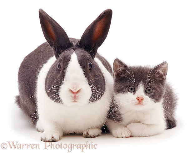 Такие похожие не родные братья и сестры в мире животных