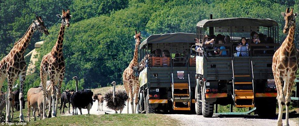 Крупнейший в Европе сафари-парк открылся в графстве Кент