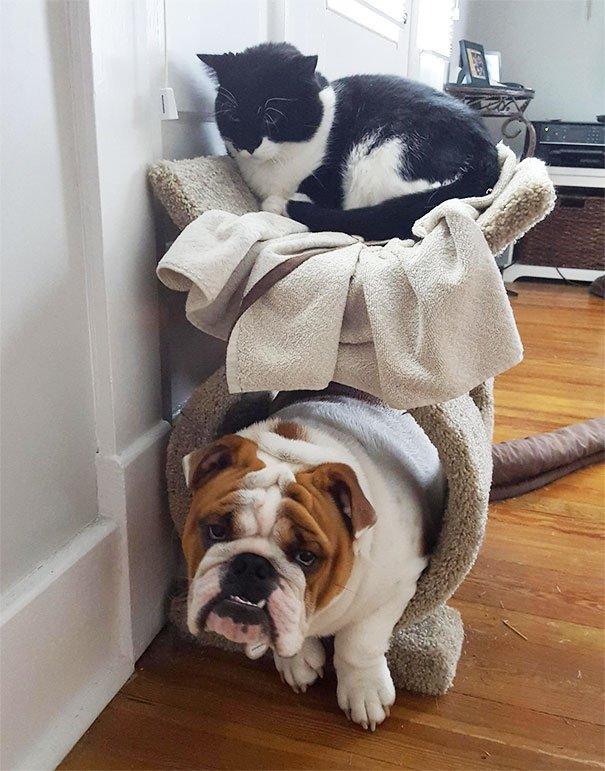 Собаки, которые думают, что они коты