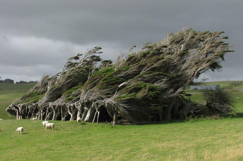 10 потрясающих деревьев с невероятной волей к жизни