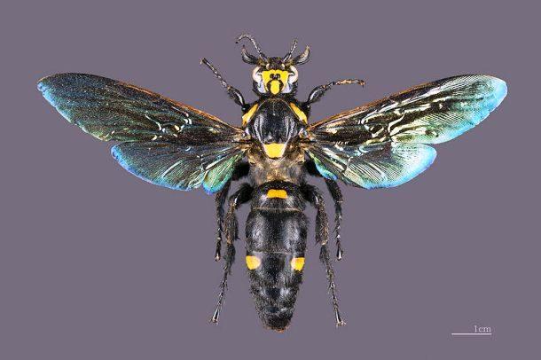 Большие жуки и другие насекомые-гиганты