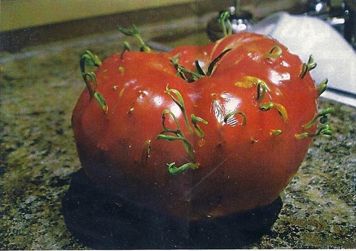 Проросшие овощи и фрукты выглядят пугающе