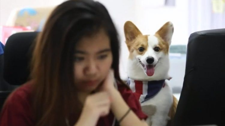 Рекламное агентство разрешает сотрудникам приводить с собой собак