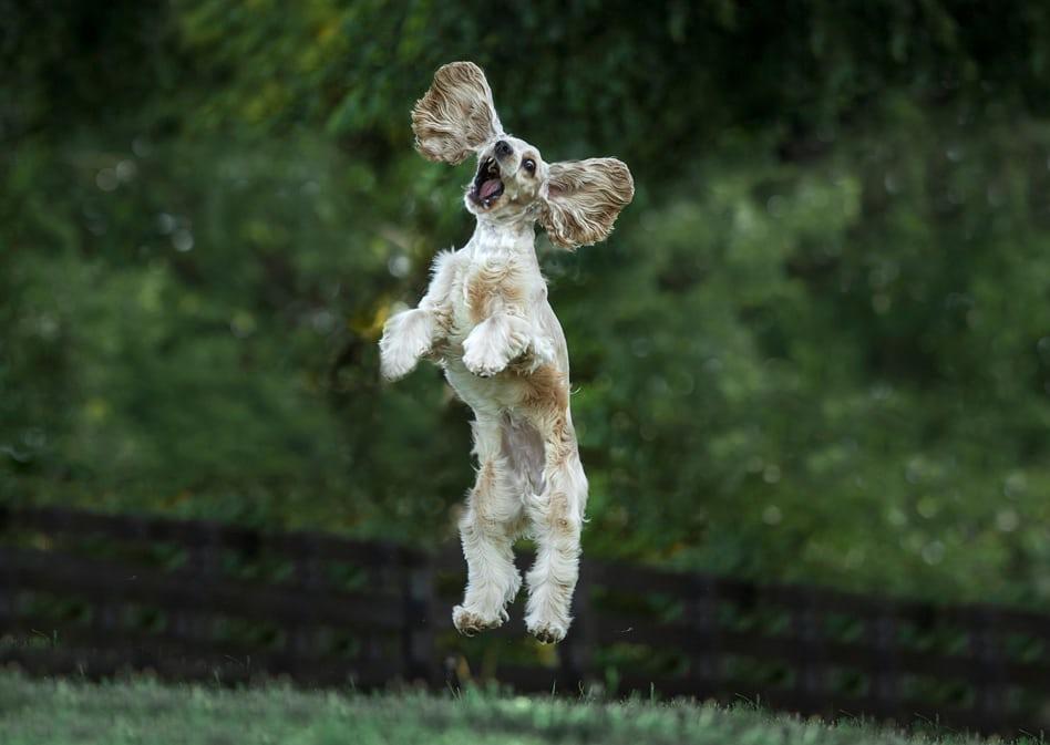Победители фотоконкурса Comedy Pet Photography Awards 2017
