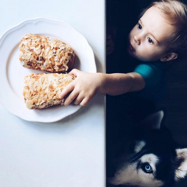 30 причин завести собаку