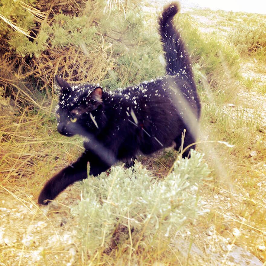 Кошка-альпинистка ходит в горы со своим хозяином