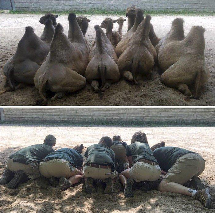 Смотрители зоопарка развлекаются в свободное время