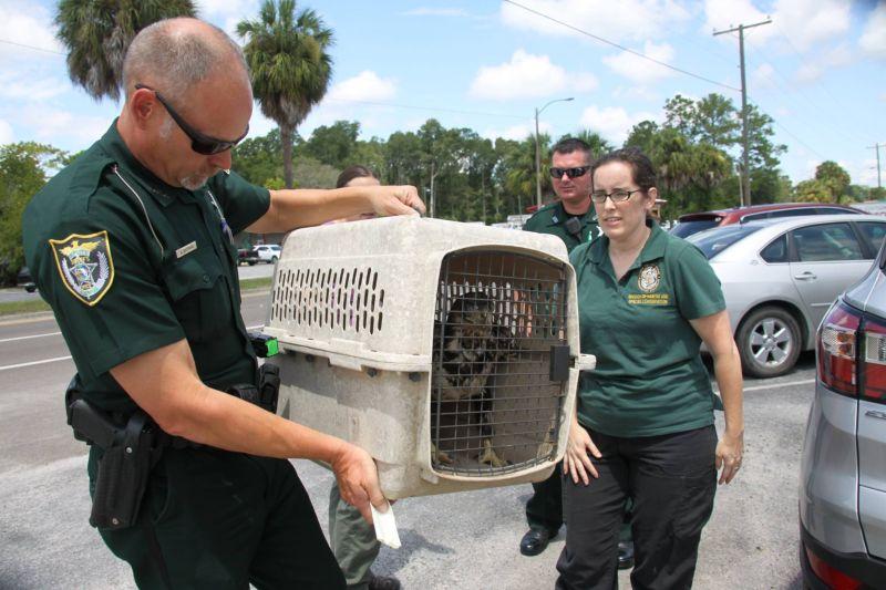 Спасение молодого орлана, застрявшего в мусоре