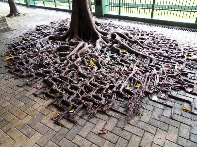 10 деревьев, которые не желают умирать