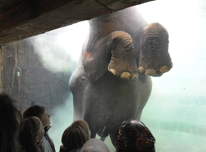 Всемирный день слонов 2017