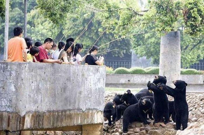 Смешные, картинка прикол про китайцев