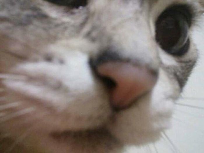 Кошки, которые взламывали пароль