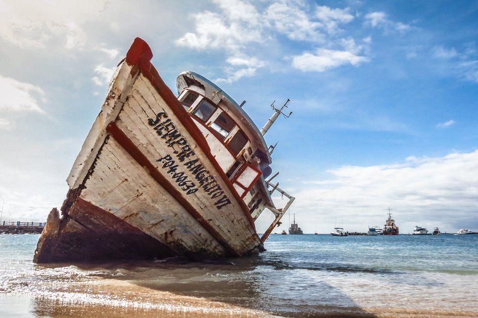 Победители фотоконкурса Galapagos Conservation Trust Photography Competition 2017