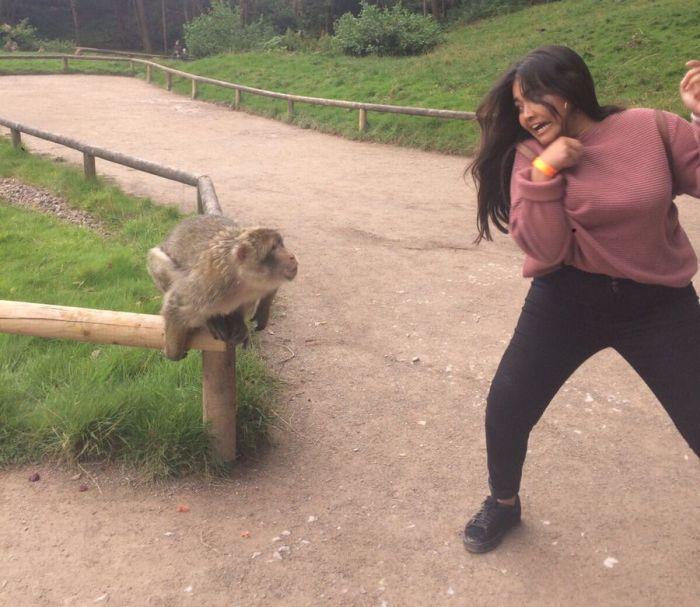 Фото на память с обезьяной не удалось
