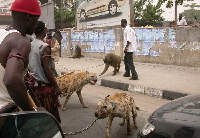 Прикольные фото из Африки