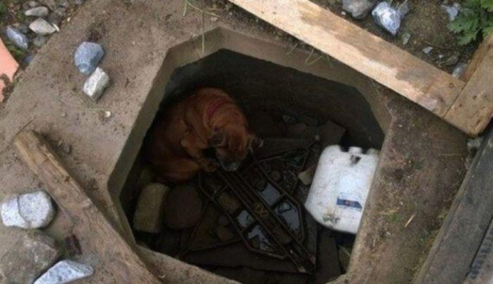 Спасение брошенной в колодец собаки