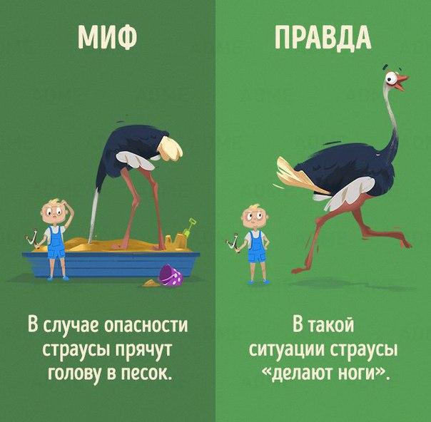 Мифы и правда о животных в картинках