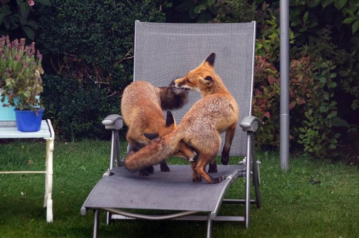 Необычные гости на заднем дворе