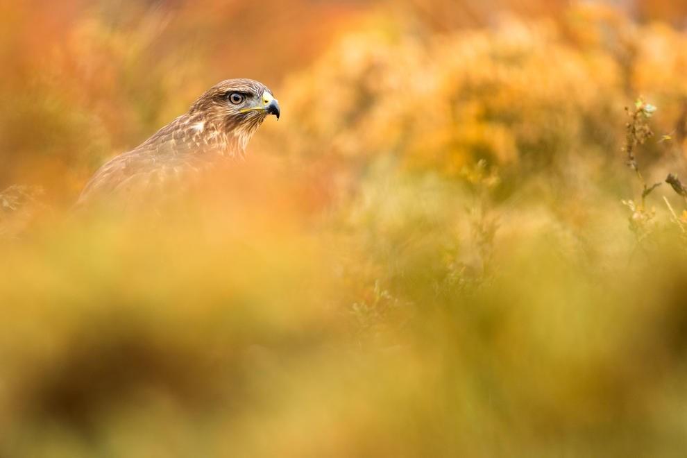 Работы победителей ежегодного орнитологического фотоконкурса