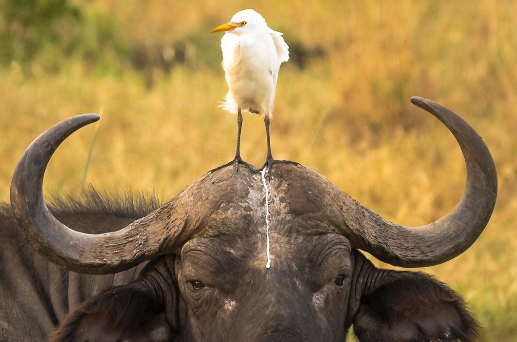 Такие смешные и забавные животные